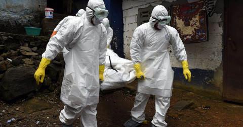 Опасная «чёрная плесень»: ВОЗ оценила вероятность новой эпидемии в России