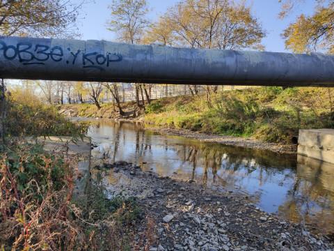 Мэрия Артёма назвала причину гибели рыбы в местных реках