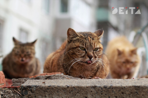 Количество животных в квартире хотят ограничить депутаты