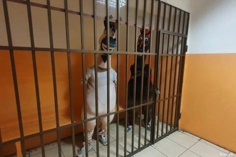 В Сочи арестовали двух ослов-вымогателей
