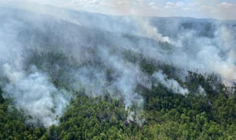 Тернейский округ полыхает – власти вводят особый противопожарный режим