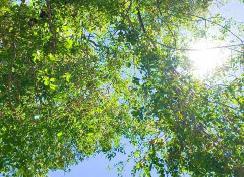 Хорошая погода завершит лето в Приморье