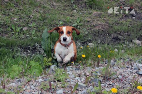 Держать собак на поводках призвали госавтоинспекторы