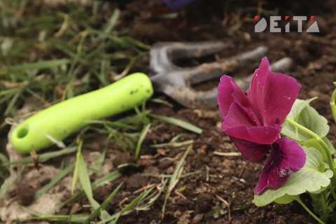 """""""Хочется закрыть ворота навсегда"""": Ботанический сад Владивостока страдает от вандалов"""