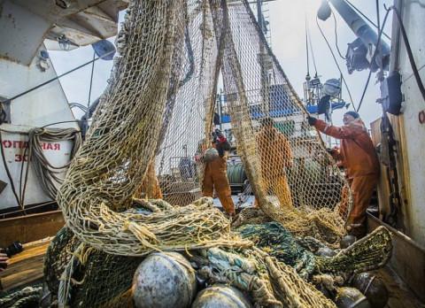 Приморские рыбаки на 75% освоили квоты на минтай