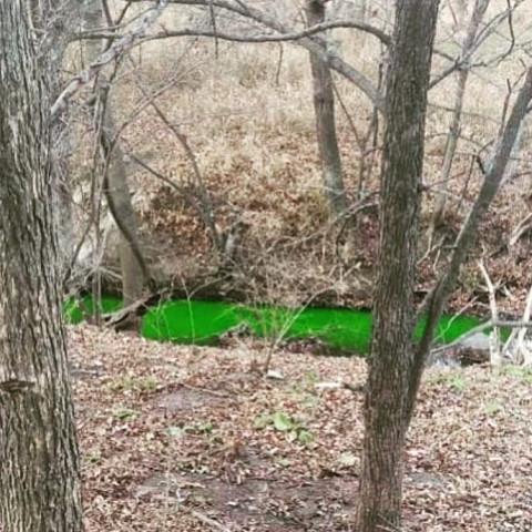 Река в Приморье позеленела