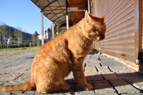 Безответственным владельцам животных готовят новые санкции