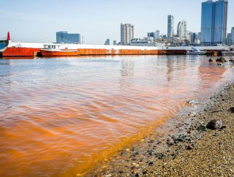 «Оранжевые приливы» добрались до Владивостока