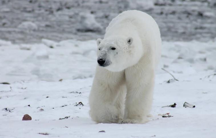 Китай нацелен на Арктику