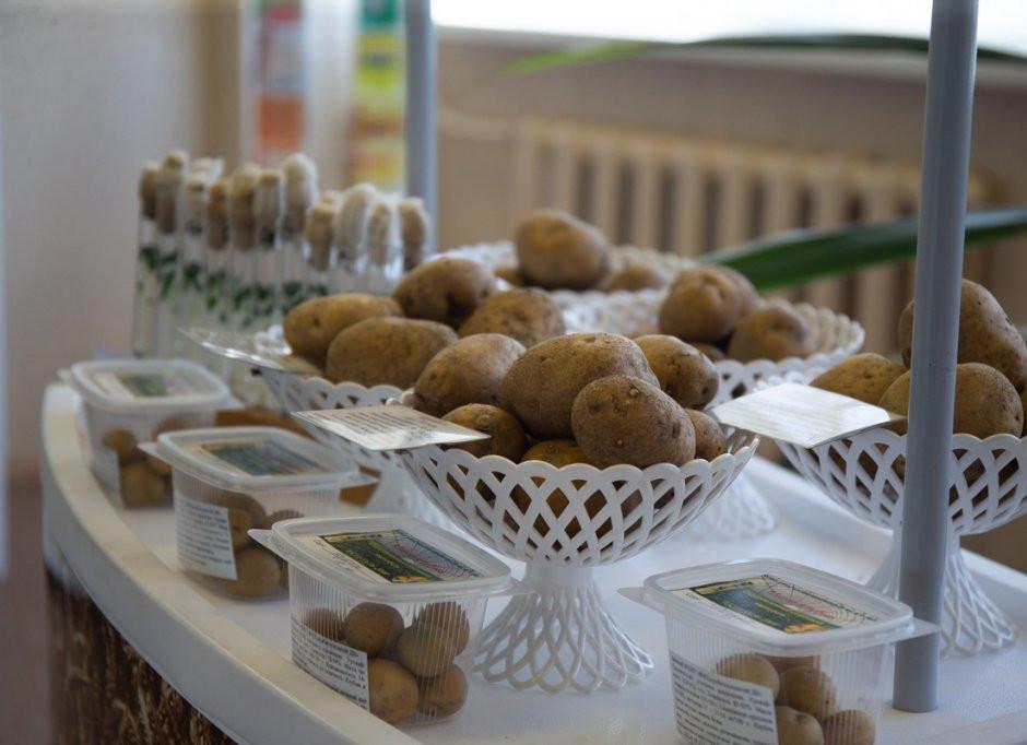 Картофельный кризис накрыл Приморье: дефицитный овощ взлетел в цене