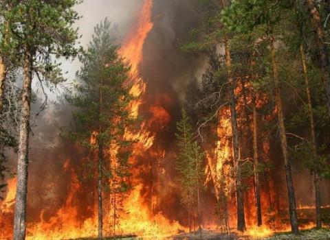 Приморские пожарные тушат нацпарк «Бикин»