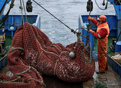 По 250 тонн сельди ежедневно добывают приморские рыбаки