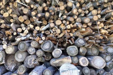 """77 деревьев за 10 миллионов спилили в Приморье """"чёрные лесорубы"""""""