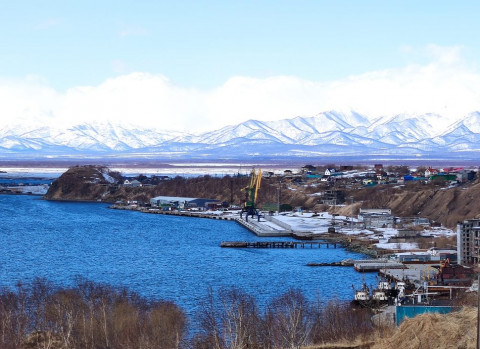 Морские обитатели снова массово гибнут на Камчатке