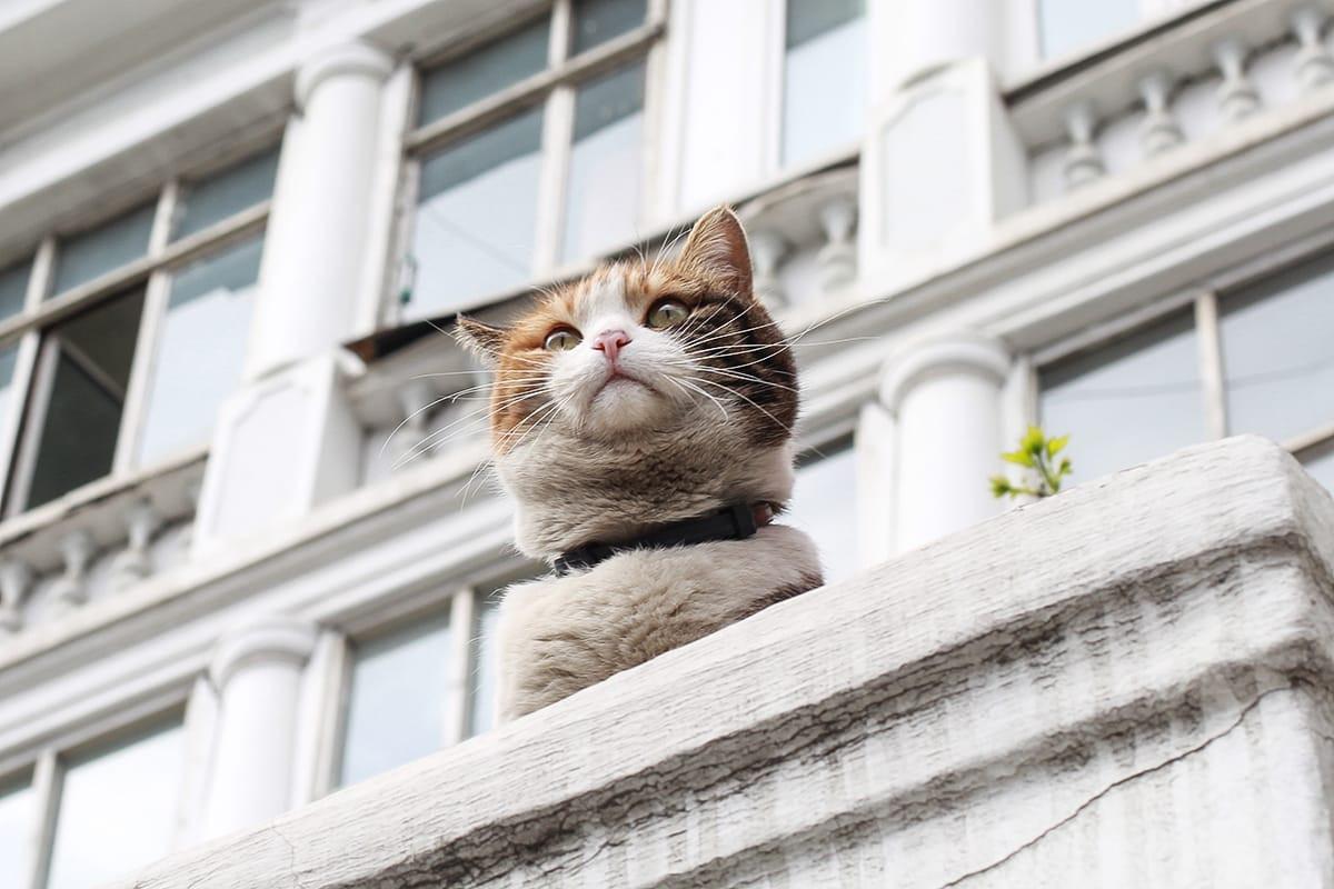 Кошачий веб-квест пройдет в Приморьеко Всемирному дню кошек