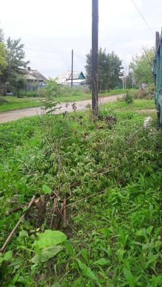 Приморцы пожаловались на вырубку молодых деревьев
