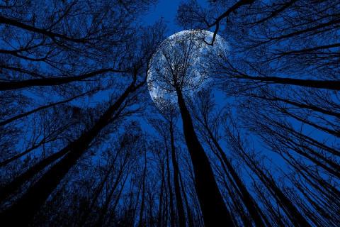 Голубая луна, голубая: приморцы увидят на небе редкое явление