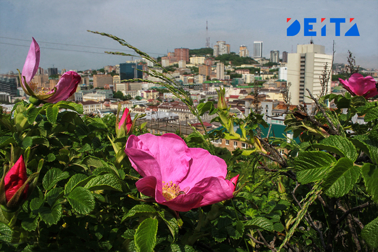 Хочется лета. Фотопроект «Негламурная столица» Дальнего Востока