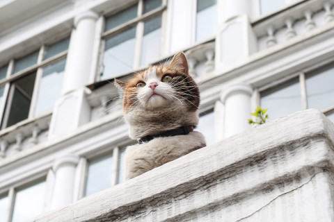 Русских котиков защитят от коронавируса новой вакциной